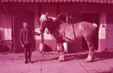 Boer met paard, Moortsele, jaren 1960