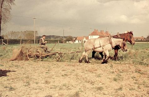 Bewerken van het veld, Oosterzele, jaren 1960