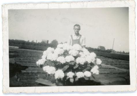 André Pieters met hortensia's, Melle, 1942-1945