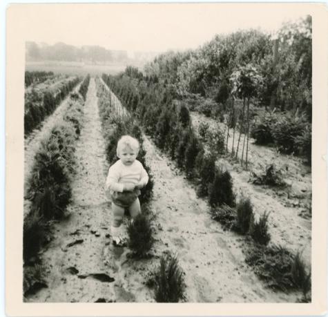 Tussen de coniferen, Oosterzele, 1967
