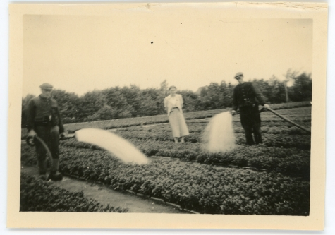 Gieten op de bloemisterij, Lochristi, 1930-1940
