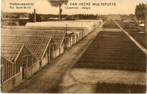 Postkaart bloemisterij Van Hecke - Wulteputte, Lochristi, 1940-1950