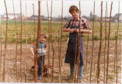 Enten van fruitbomen, Oosterzele, 1984.