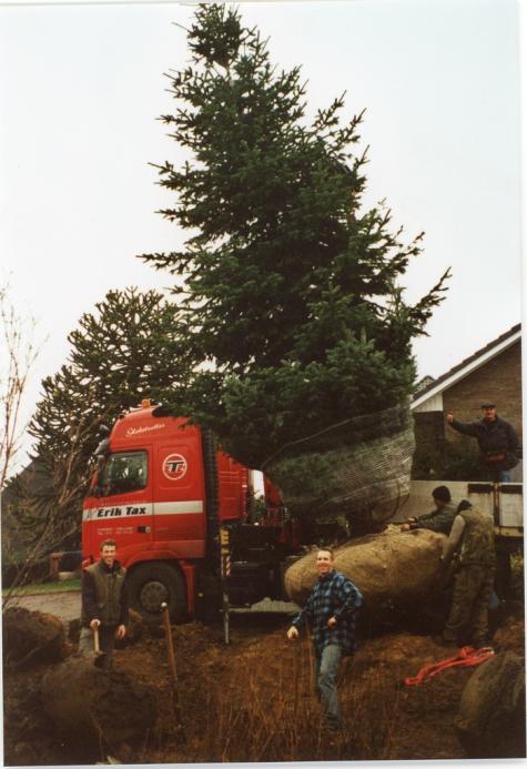 Transport van een kerstboom, Oosterzele, 2009.