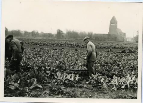 Zicht in een serre, Zaffelare, 1930-1950.