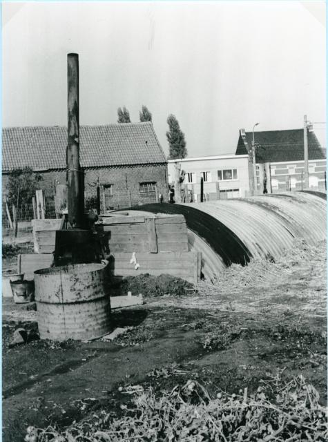 Azalea japonica van Van Hecke, Gent, 1940-1950.