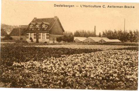 Bloemisterij Aelterman-Bracke, Destelbergen, 1942