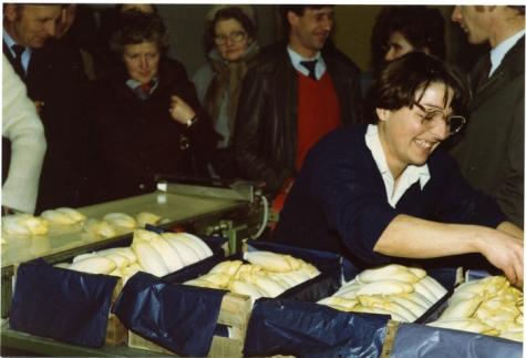 Bedrijfsbezoek witloofbedrijf, Frankrijk, jaren 1980