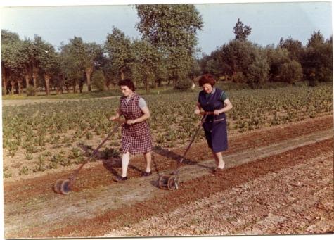 Wieden met molentje, Sint-Lievens-Houtem, jaren 1970-1980