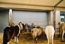 Pony's op Houtem Jaarmarkt, Sint-Lievens-Houtem
