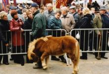 Keuring shetland pony, Sint-Lievens-Houtem, 1998-2005