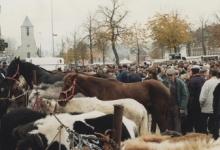 Paarden en pony's op Houtem Jaarmarkt, Sint-Lievens-Houtem, 1995