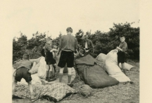 Chiro Melle vult strozakken op kamp, Genk, 1957