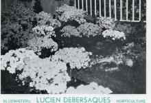 Visitekaartje bloemisterij Debersaques, Destelbergen, 1970-1980