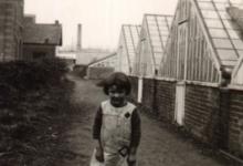 Maria De Pauw en Henri Van De Slijke tafelen witloofwortels in, Sint-Lievens-Houtem, jaren 1950-1970.