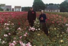 Arthur De Neve en echtgenote tussen rozenstruiken, Oosterzele, eind jaren 1970.