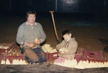 Witloof oogsten bij Van De Keere, Sint-Lievens-Houtem, eind jaren 1980
