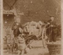 Broodbedeling met hondenkar, Sint-Lievens-Houtem