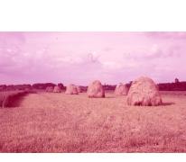 Hooiberg op een veld, Moortsele, jaren 1960
