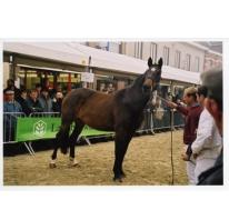 Keuring Belgisch warmbloedpaard, Sint-Lievens-Houtem, 1998-2005