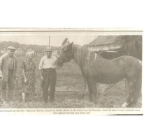 Het oudste paard van Landskouter Bella, Landskouter, 1976