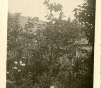 Met de go cart in de tuin, Balegem, 1951
