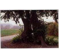 """SPOOKLINDE"", Bavegem, Sint- Lievens- Houtem"