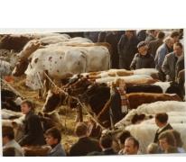 Koeien en bezoekers op Houtem Jaarmarkt, Sint-Lievens-Houtem, 1989
