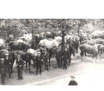 Paardenmarkt, Merelbeke, 1918