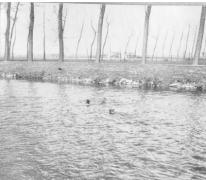 De vliegeniers van Staffel 13 zoeken verpozing in de Leie achter het vliegveld van Sint-Denijs-Westrem, 1917