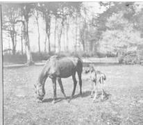 Park in Sint-Denijs-Westrem, 1917.