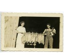 Geëmigreerd, Alice Bloem en Cyriel De Bruycker, tabakskwekerij in Canada, Sint-Lievens-Houtem