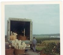 Export van planten, Melle, 1972