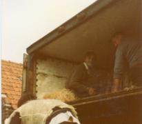 Transport van clivia's, Melle, 1985