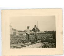 Octaaf en André Pieters tussen hortensia's, Melle, 1952