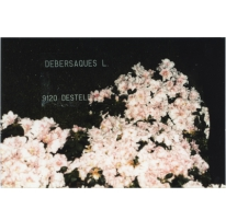 Bloemisterij Debersaques op Gentse Floraliën, Destelbergen, 1990