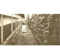 Marie-Thérèse Volckaert tussen de planten, Merelbeke, 1931