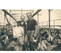 Personeel op bloemisterij Volckaert-Ghysels, Merelbeke, 1930-1950