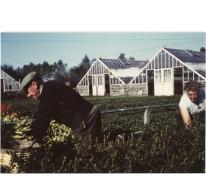 René Van Hecke op de bloemisterij, Lochristi, 1950-1980