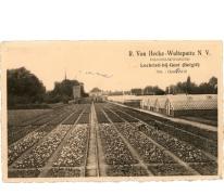 Postkaart bloemisterij Van Hecke - Wulteputte, Lochristi, 1930-1950