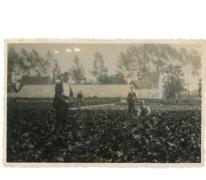 Renaat Goethals tussen de begonia's, Lochristi, 1930-1939