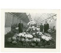 Broers en bloemisten René en Gustaaf Goethals, Lochristi, 1950
