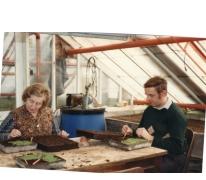 'Repikeren' van begonia's, Lochristi, 1978