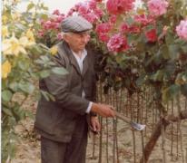 Arthur De Neve tussen rozenstruiken, Oosterzele, jaren 1980.