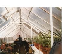 Aan het werk in de serre van PC Caritas, Melle, 1981.