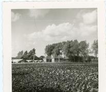 Visitekaartje bedrijf Adolf Van Hecke, Zaffelaren, 1910-1920.