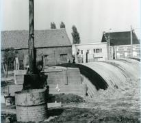 Witloof groeit op het witloofveld, Sint-Lievens-Houtem, 1950-1960