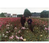 Arthur De Neve en echtgenote tussen rozenstruiken, Oosterzele, eind jaren 1970