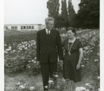 Azalea's op bloemisterij Van Hecke, Zaffelare, 1945-1952.