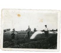 Postkaart van de zieken aan het werk op het veld, PC Caritas Melle, 1900-1913.